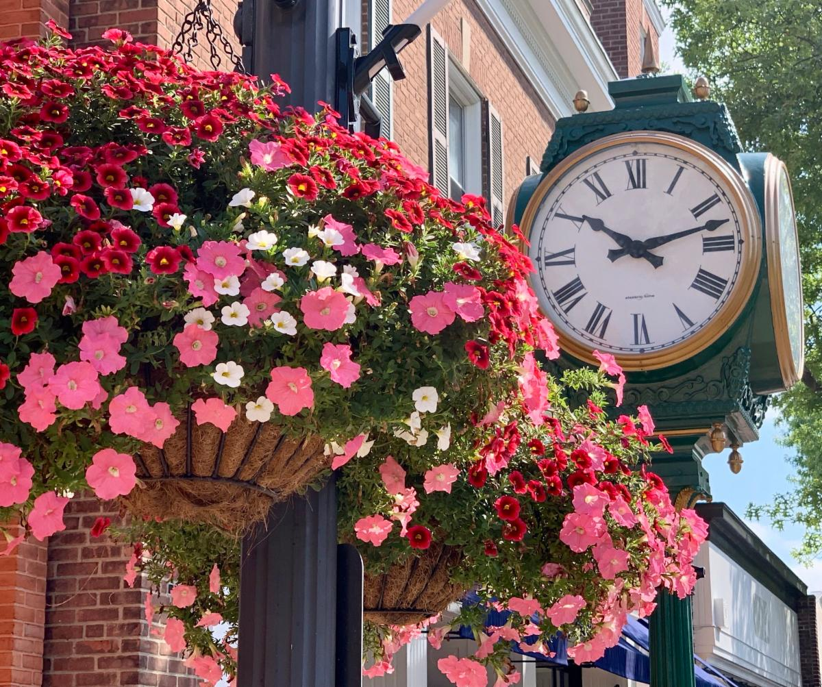 Hanging baskets in August