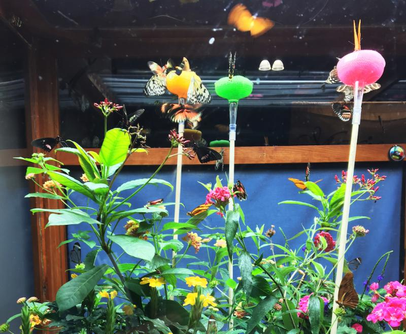 Flower show butterfly display