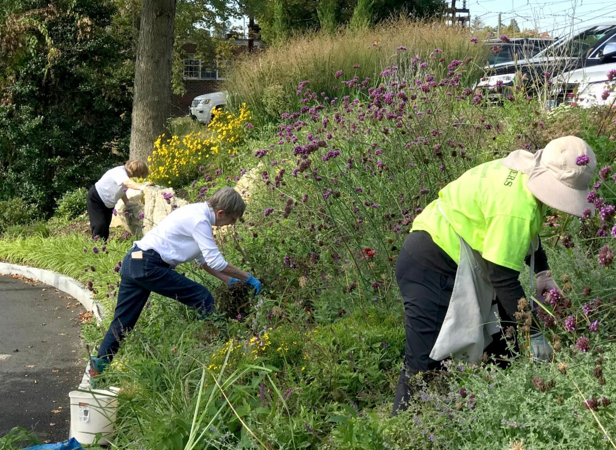 Weeding at Post Office Slope
