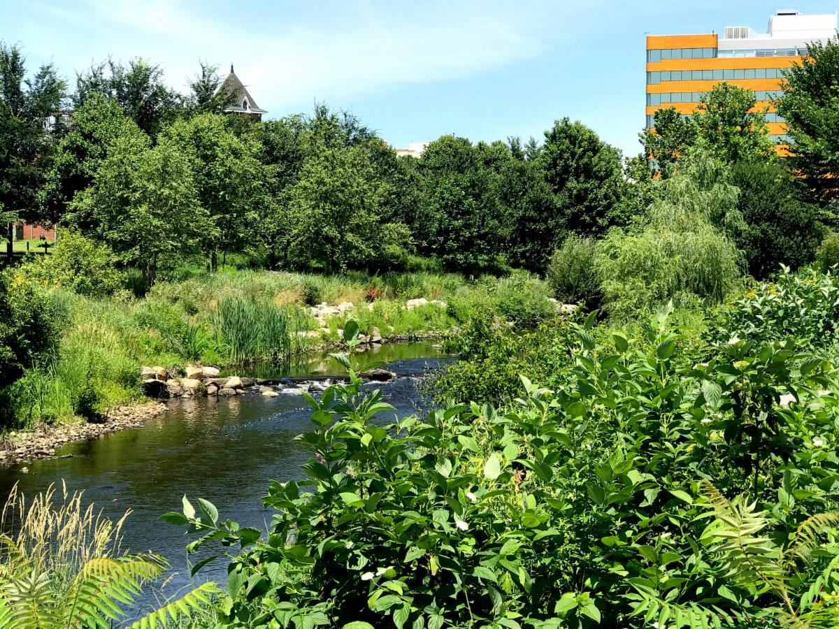 Mill River Park view