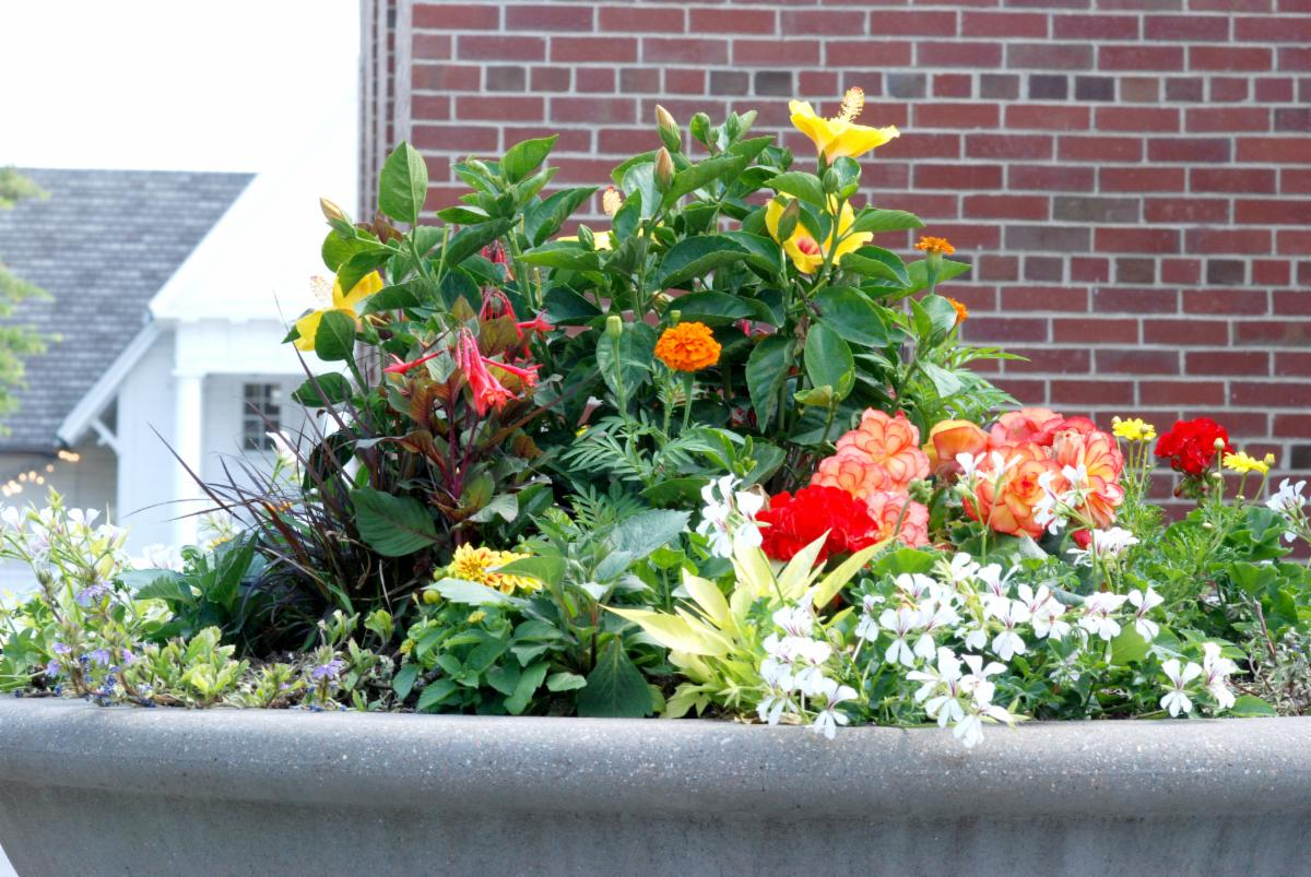 town hall new planters 2021