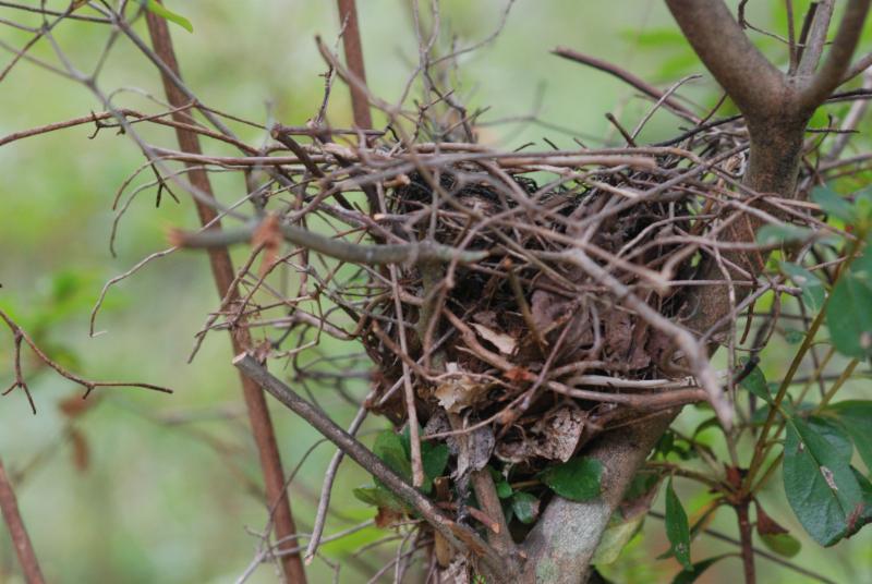 nest at Lee Garden