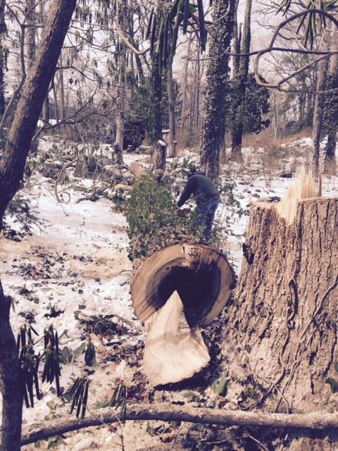 Lee Garden Tree Cut