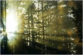 sun in woods