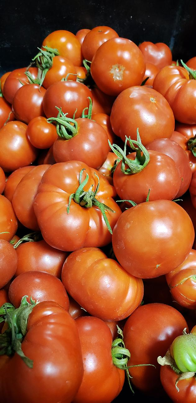Cedar Spring Farms Tomatoes