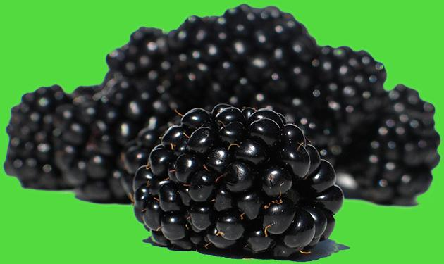 Cedar Spring Farms' Blackberries