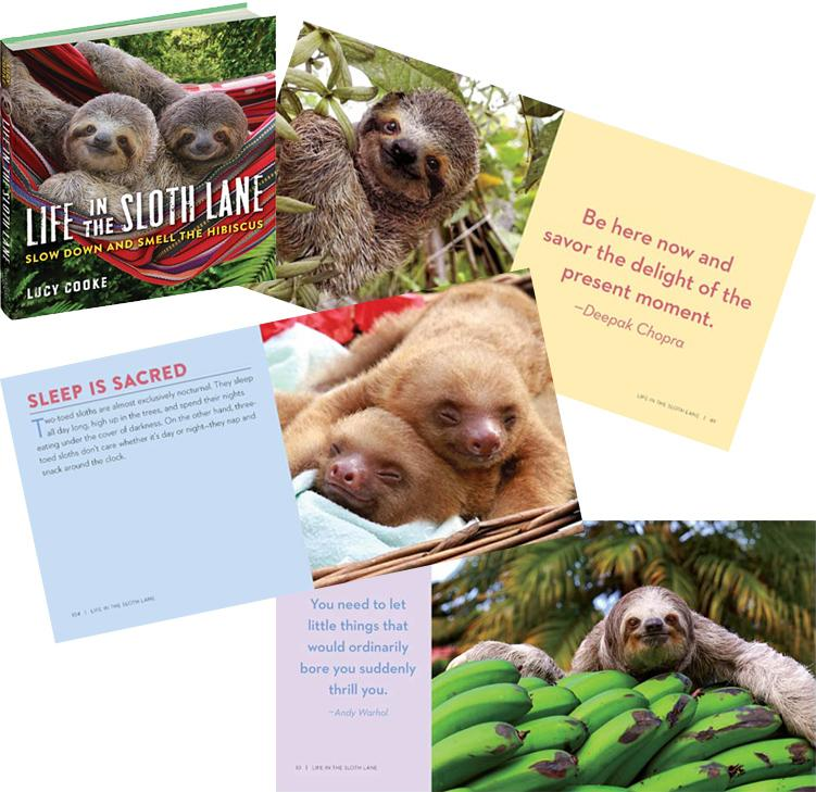 Life in the Sloth Lane
