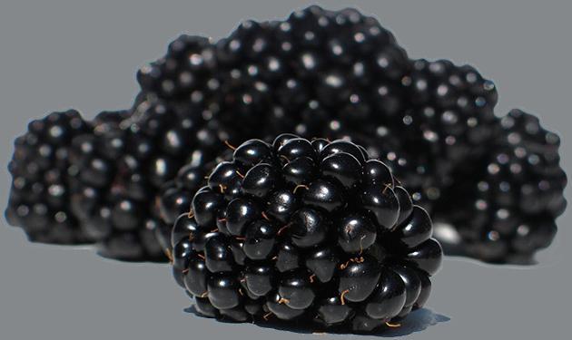 Cedar Spring Farms Blackberries