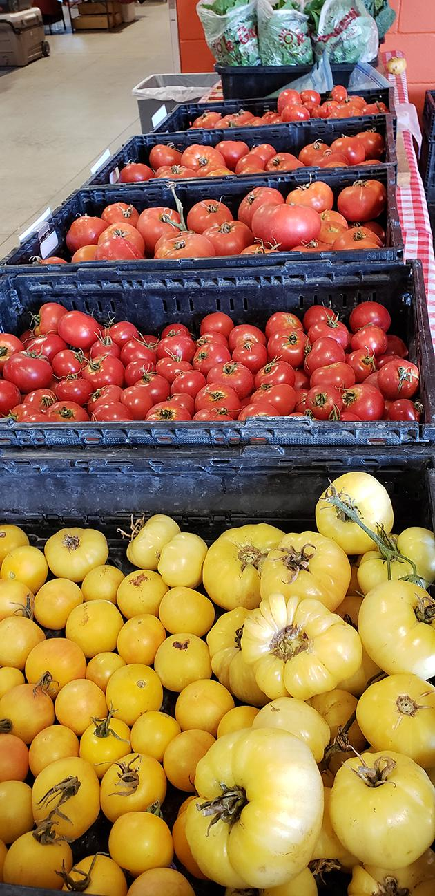 Cedar Spring Farms - Tomatoes - Variety