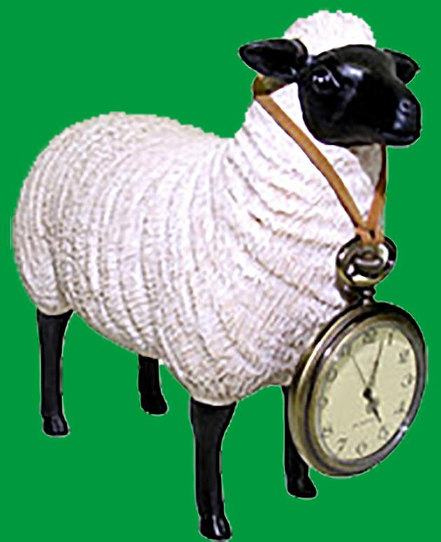 Ewe with Pocketwatch