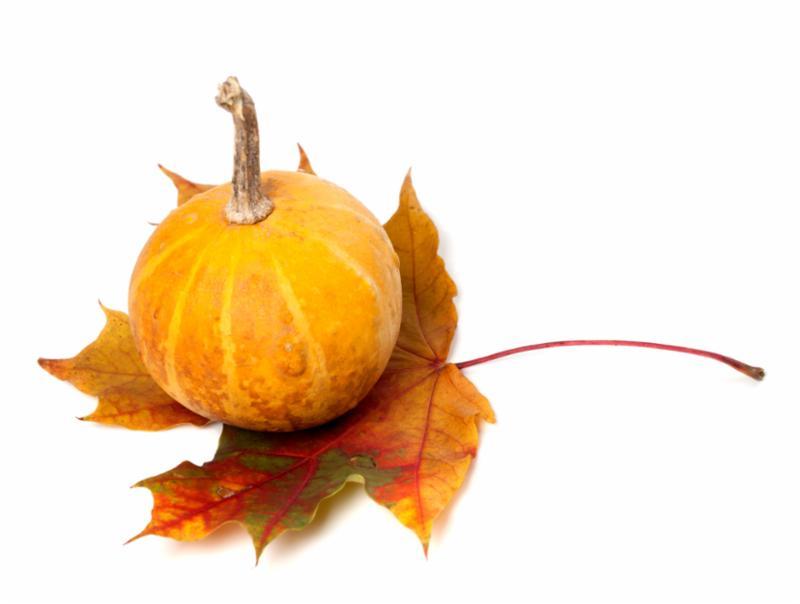 orange_pumpkin_leaf.jpg