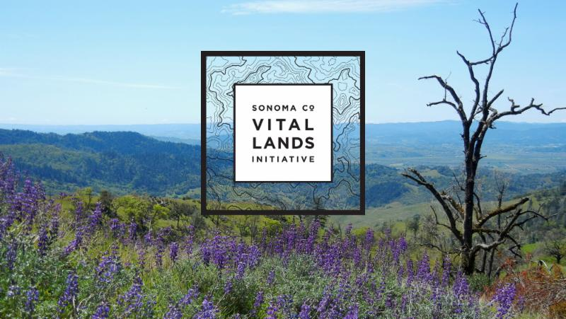 Image of Vital Lands Initiative Logo over background of picture of Sonoma County view of mountains covered in green grass and purple wildflowers.