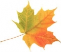 pinecrest leaf
