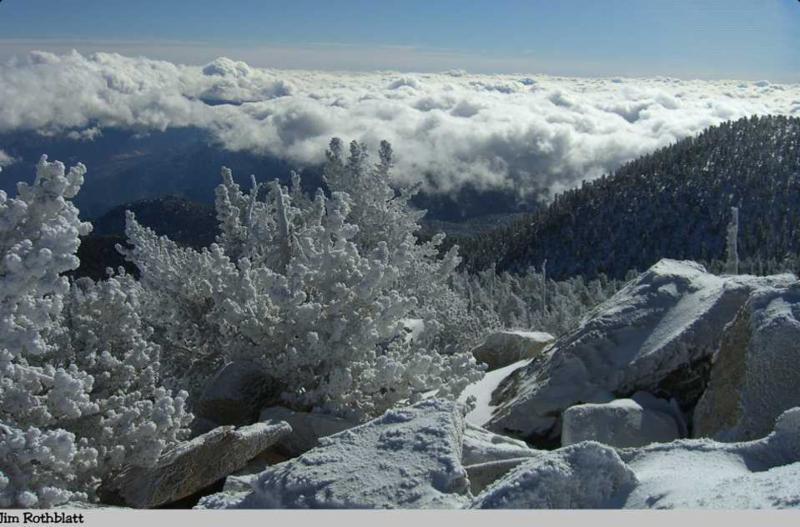 Mt. San Jacinto Natural History Association Image