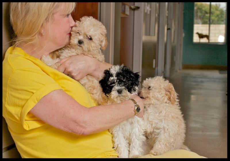 Pattie Albelo with puppies