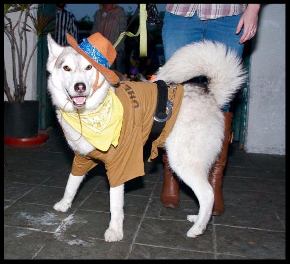 Yappy Hour Halloween