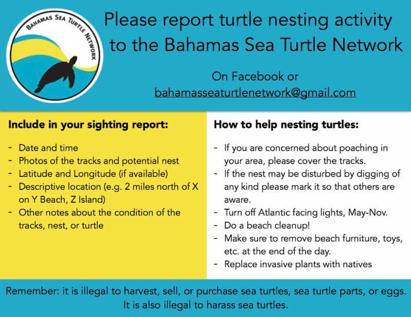 Bahamas Sea Turtle Network - nesting report flyer