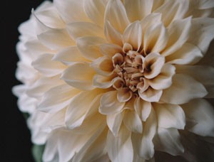 picture of flower