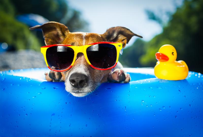 Photo of dog wearing sunglasses in baby pool