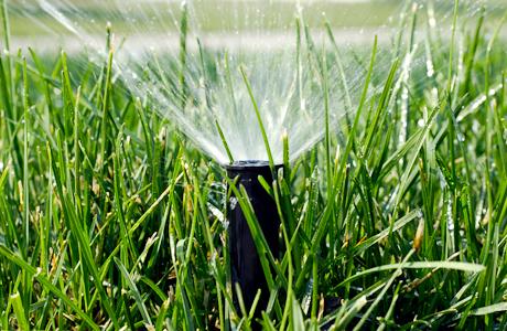 Spring Irrigation
