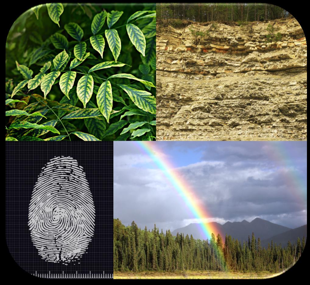 A collage of patterns - rainbow leaves fingerprint sedimentary rocks