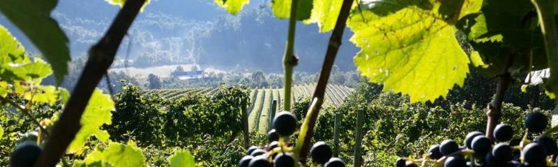 November Winery Events Festivals