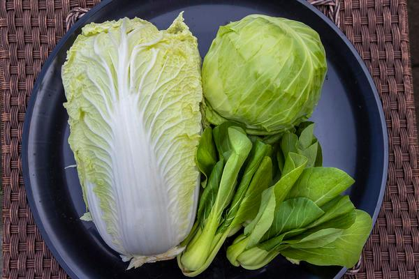 bok choy next to head of cabbage