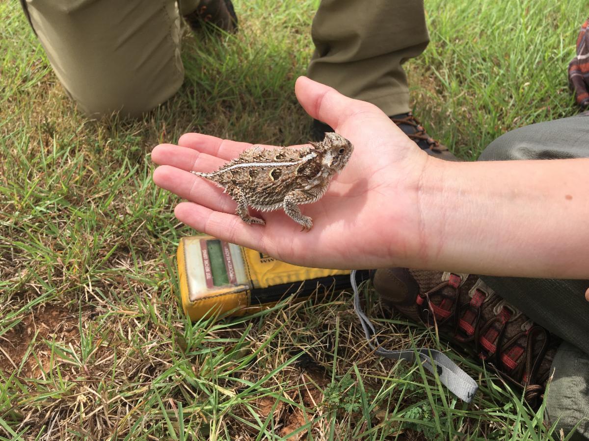hand holding a lizard