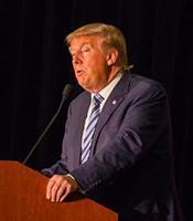 Donald Trump _credit Matt A.J._