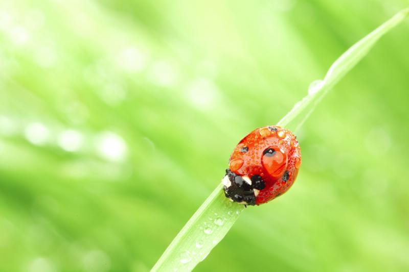 ladybug_water_glass.jpg