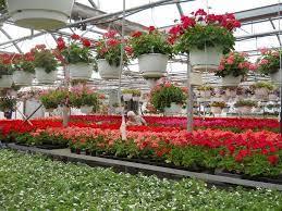 rays greenhouse