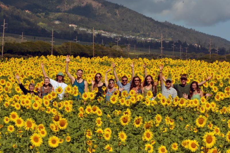 Sunflower Group Shot