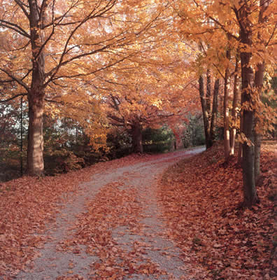 autumn-foliage-road.jpg