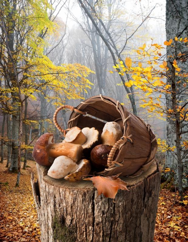 mushroom_basket_stump.jpg