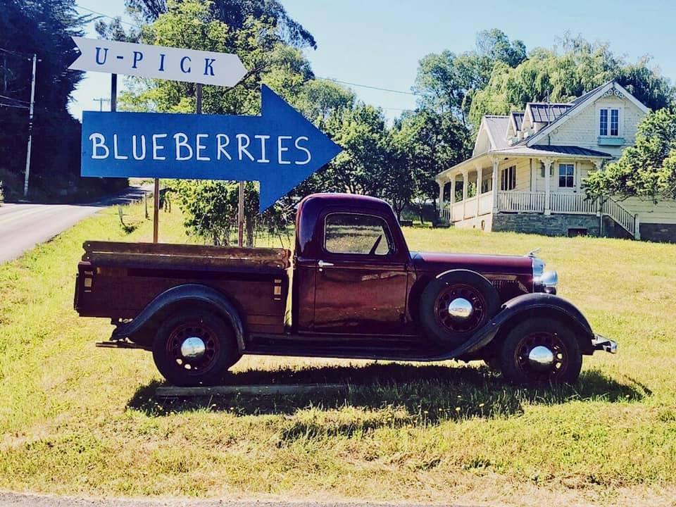 duckworth blueberries