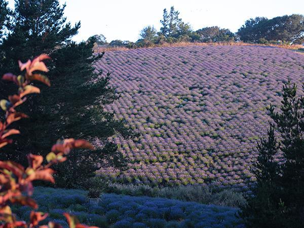 monte bellaria