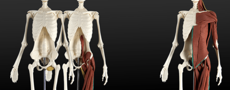 Anatomy In 3d This Weekend At Ehs