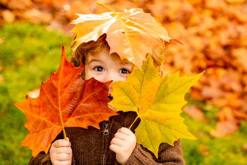 Autumn Baby Portrait In Fall Yellow Leaves_ Little Child In Woolen Hat_ Beautiful Kid in Park Outdoor_ Knitted Clothing for October Season