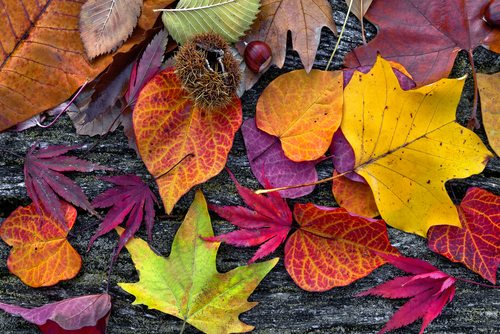 Abstract background of autumn leaves. Autumn background.