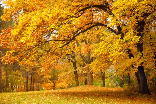 Collection of Beautiful Colorful Autumn Leaves   green_ yellow_ orange_ red