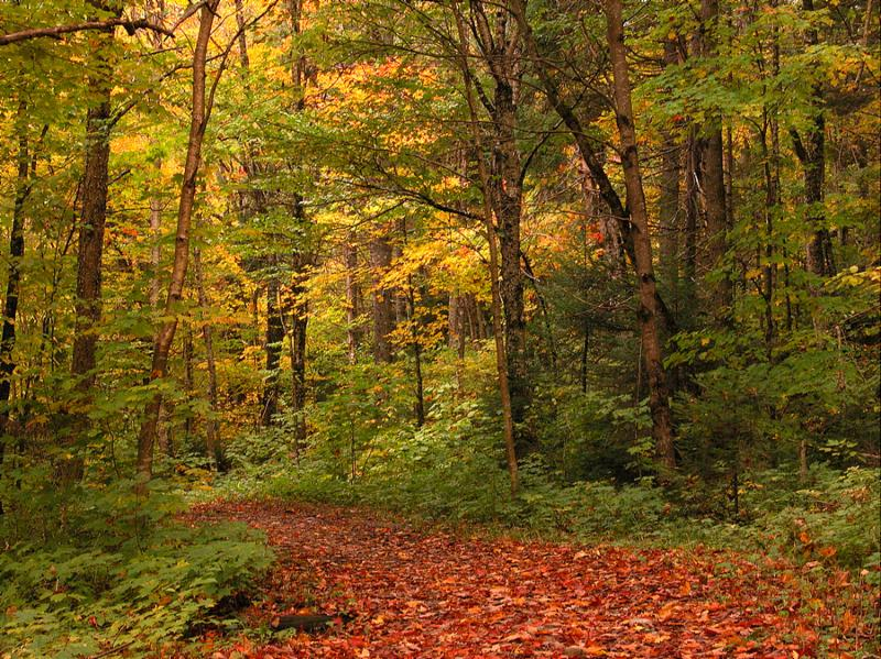 on a cool crisp fall day, a walk in the forest is a very pleasant pastime