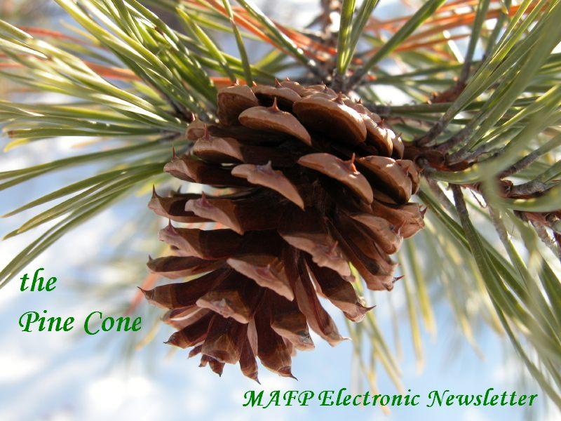Pine Cone masthead