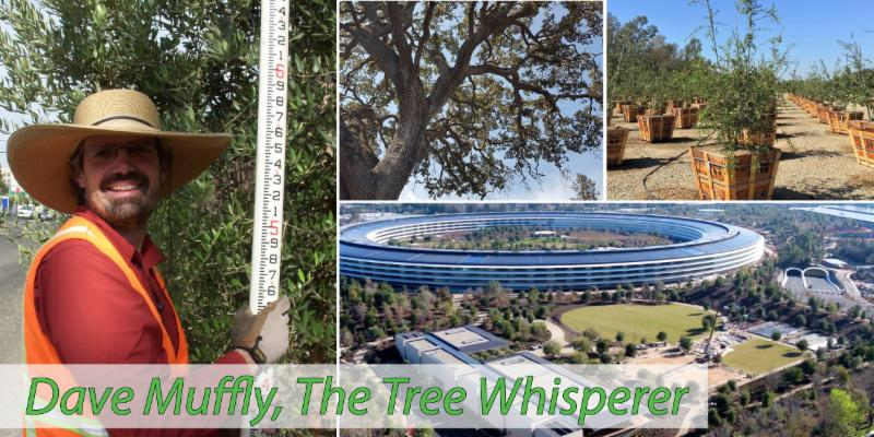 Dave Muffly, The Tree Whisperer