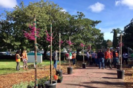 Legacy of Trees Planting