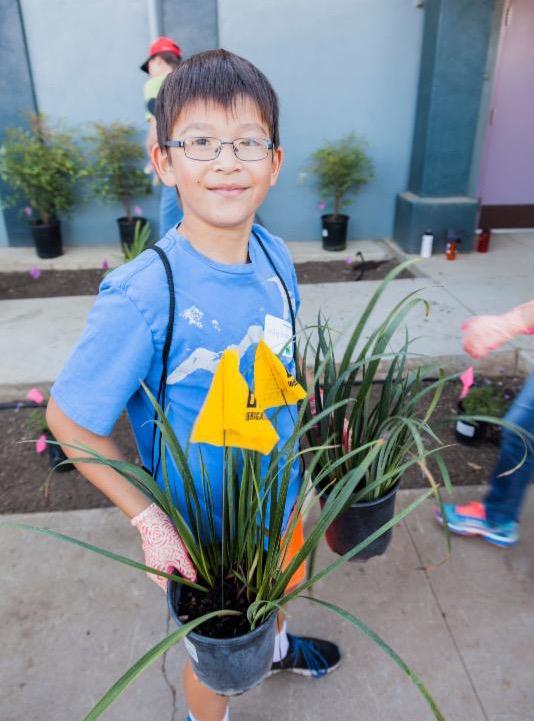 Greening the school campus
