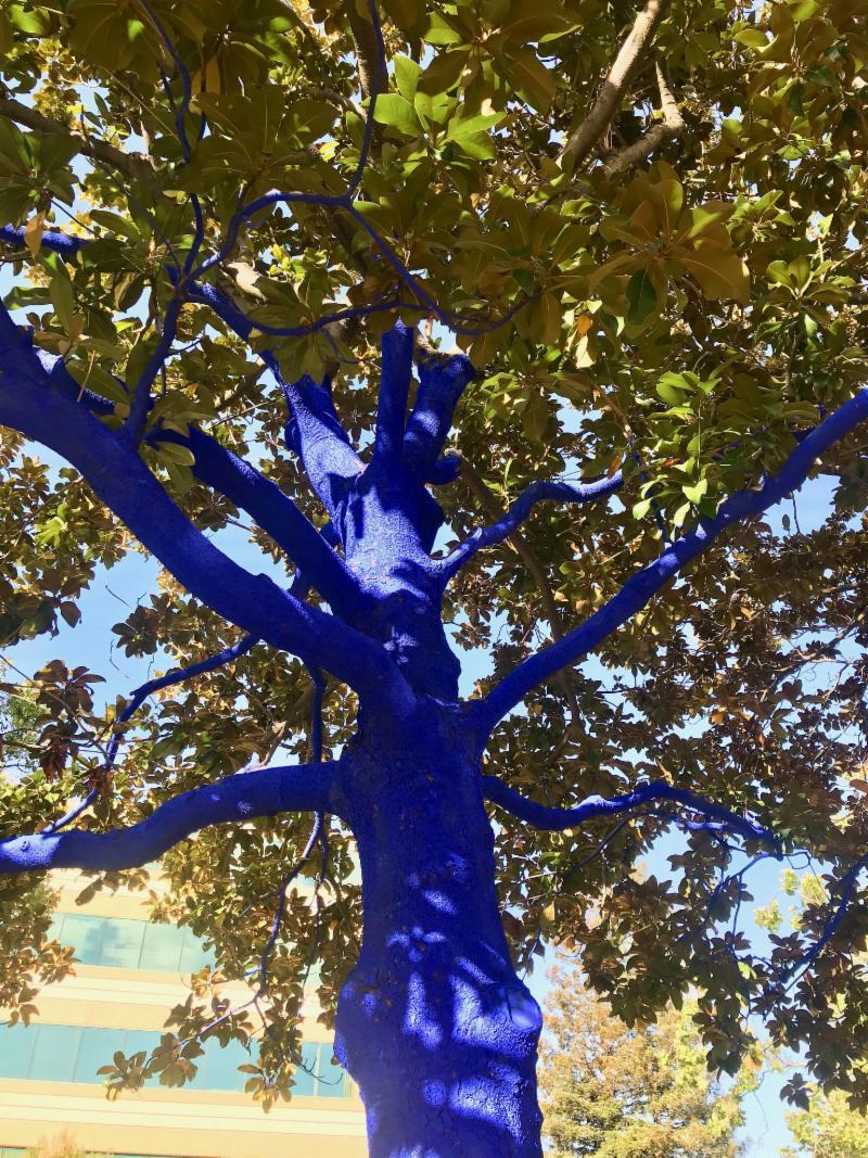 Blue Tree at Kings Plaza in Palo Alto