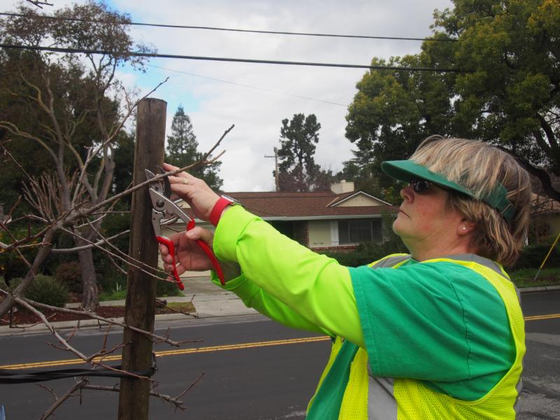 Kathy Alford pruning