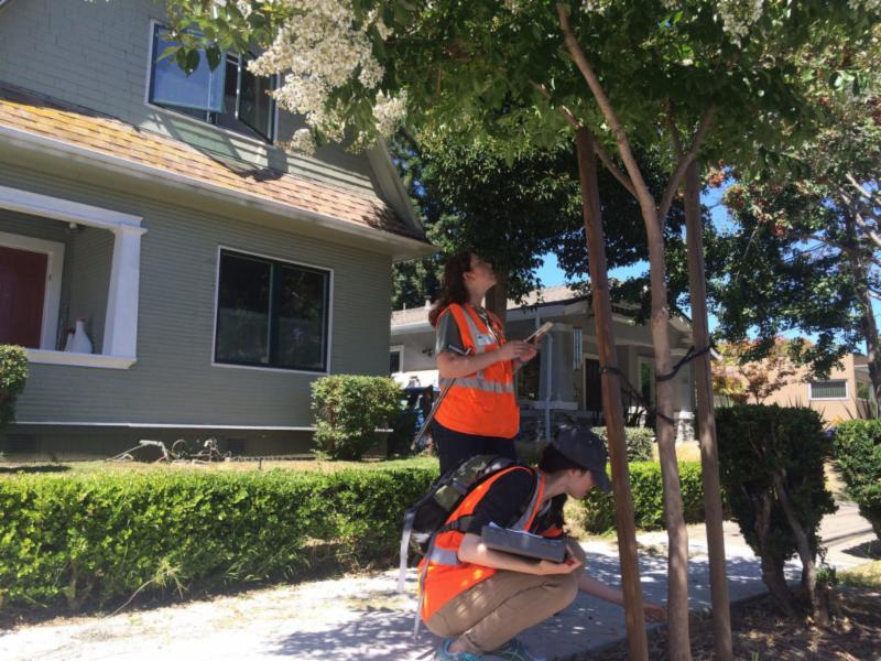Tree Risk and Assessment