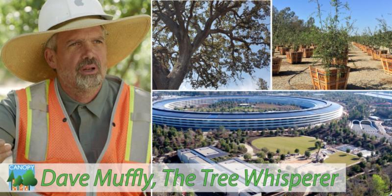 Meet the Tree Whisperer