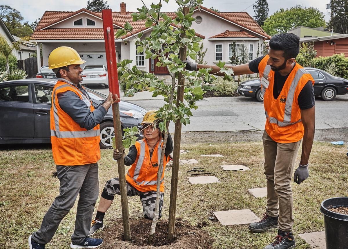 Barron Park tree planting